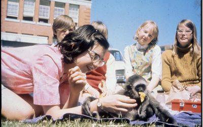 Gypsy, A Gibbon in Grade Six